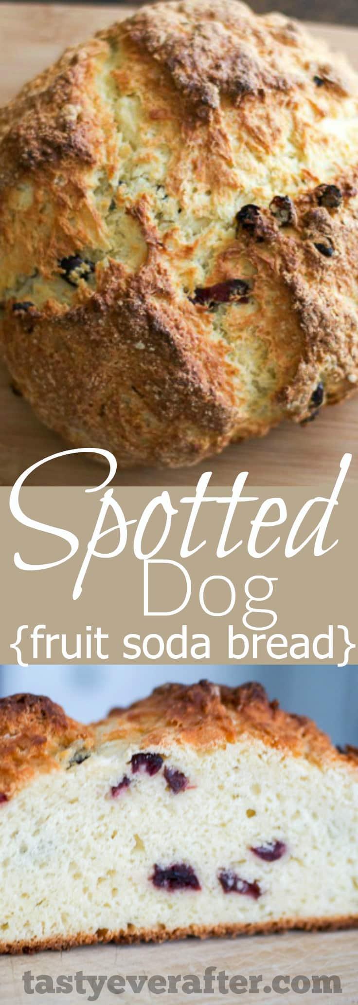 Irish Spotted Dog