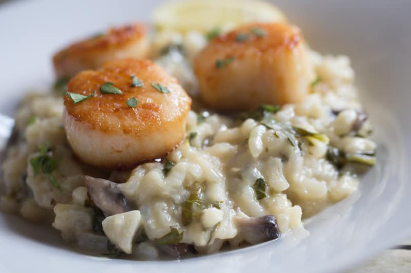 Close up of cooked scallops on creamy risotto