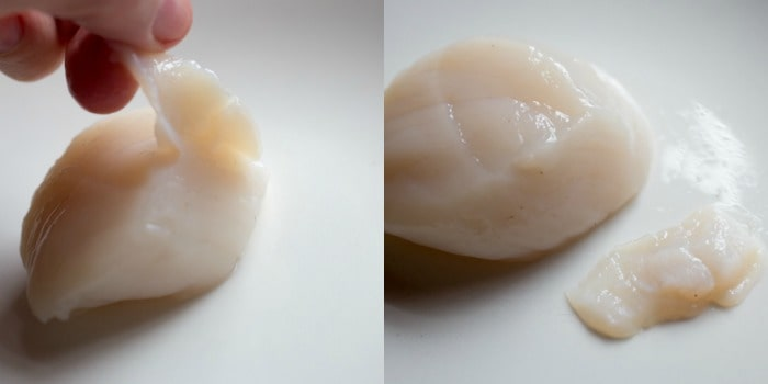 Picture of raw scallop showing removing the side-muscle for pan seared scallops recipe